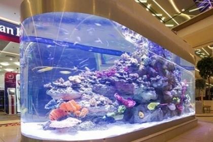 Большие морские аквариумы